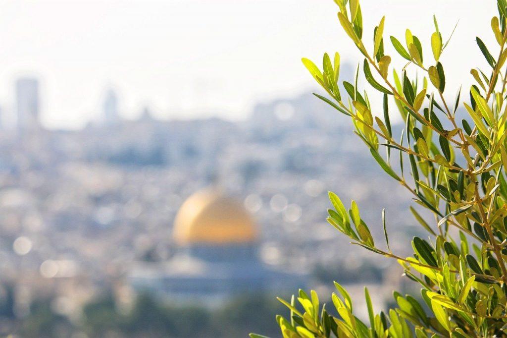 L'olivier dans la Bible